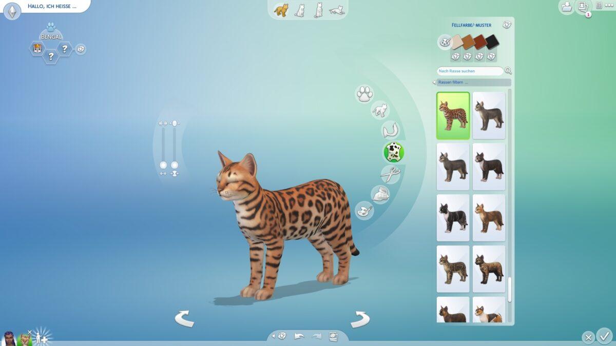 Katzenerstellung im Create-a-Pet-Modus