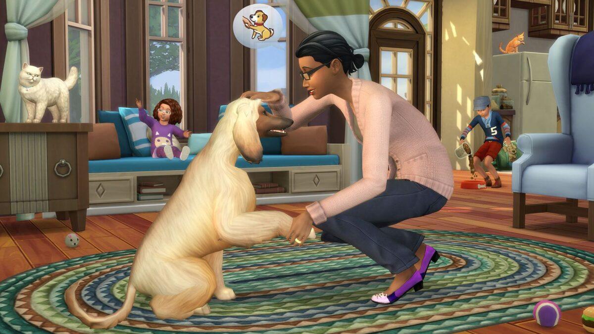 Hund gibt Frauchen Pfote