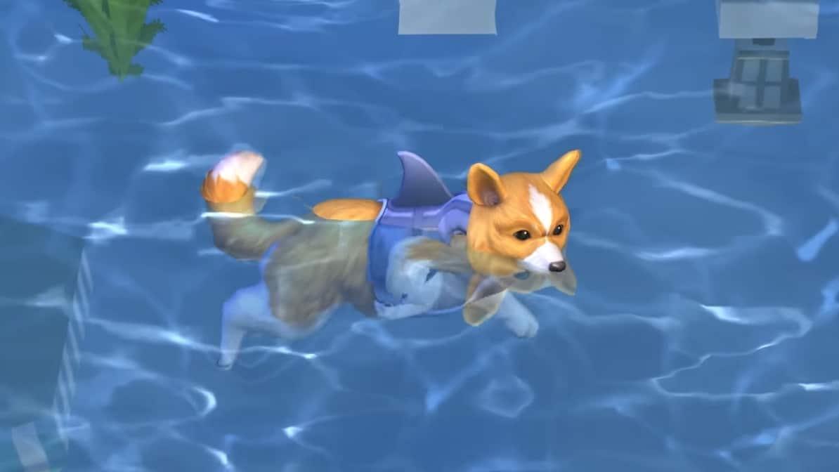 Hund mit Haiflossen-Leibchen schwimmt in Pool