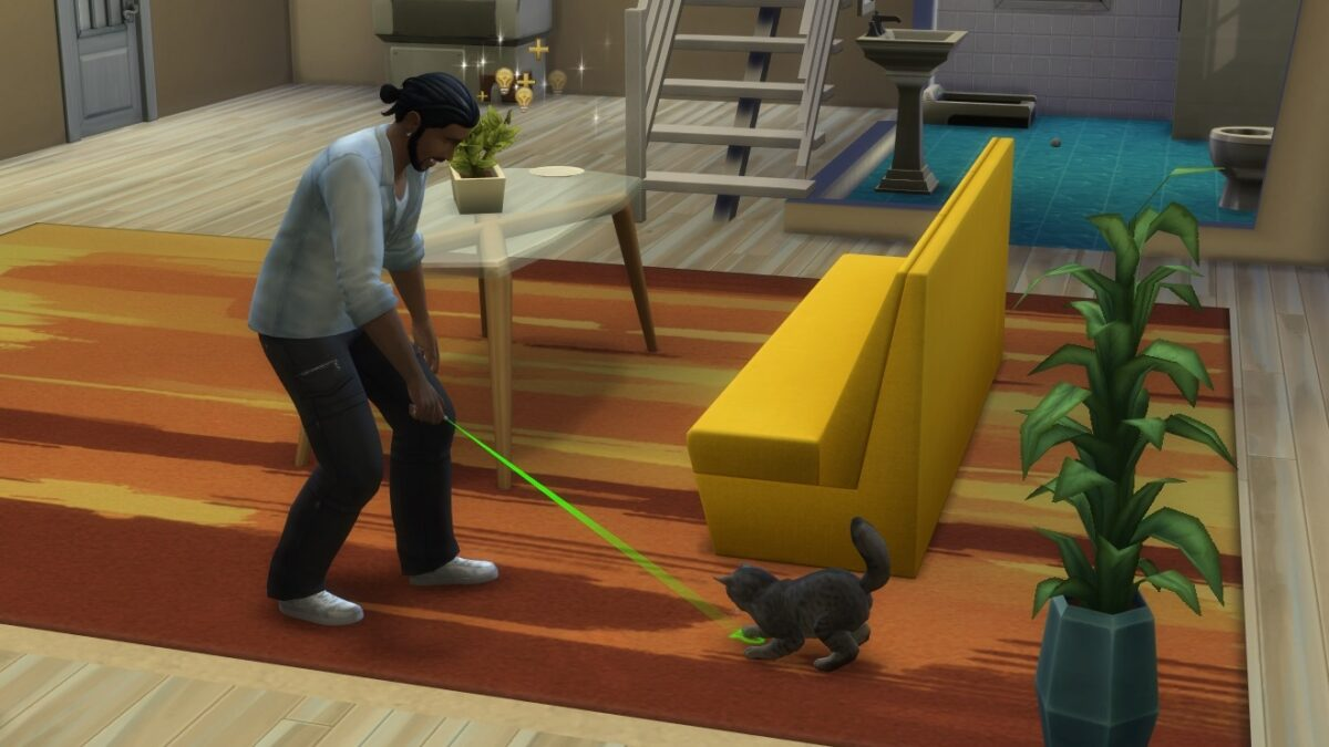 Mann spielt mit Laserpointer mit Maine Coon Katze
