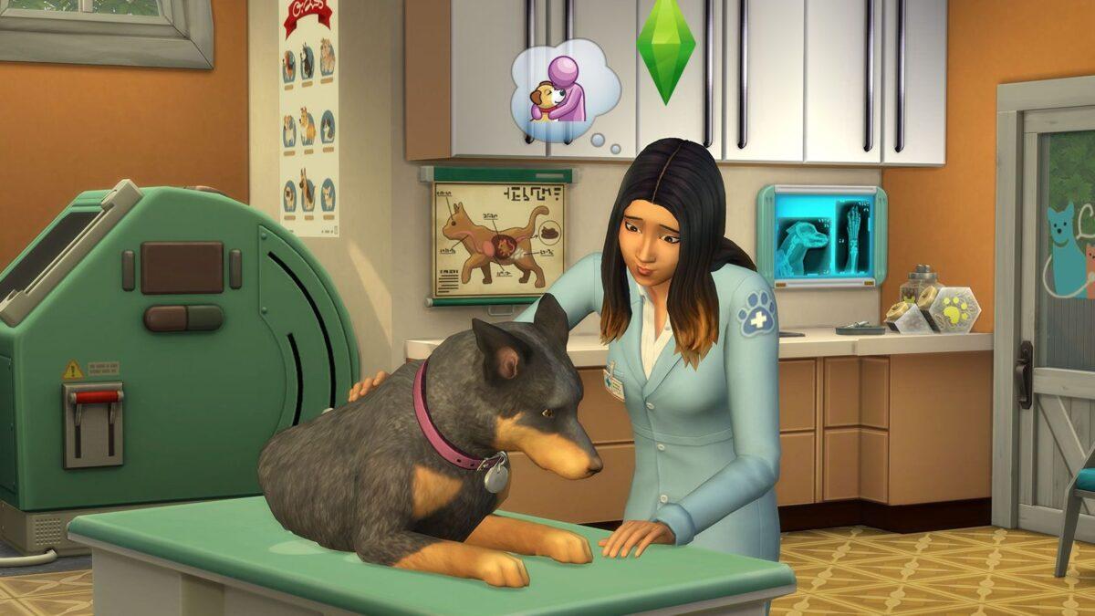 Tierärztin streichelt Hund auf Behandlungstisch